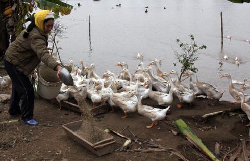 La vie d'une paysanne à Tien Lang © 2013 Hà Anh