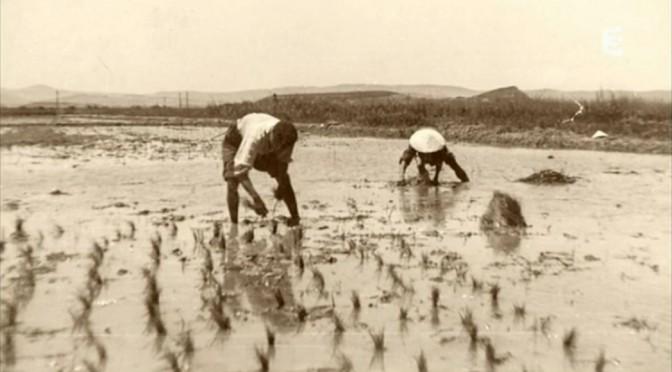 Riz amer : Les Indochinois en Camargue (1939-1952) [Documentaire]